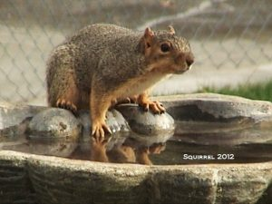 11_Squirrell_2012_by_Susan_C_Sanders-Sam_28DSC00911