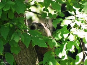 2June12_Fred_in_Tree