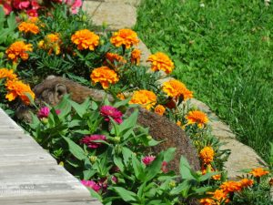5-Raggedy_In_Flower_Bed_July19_1